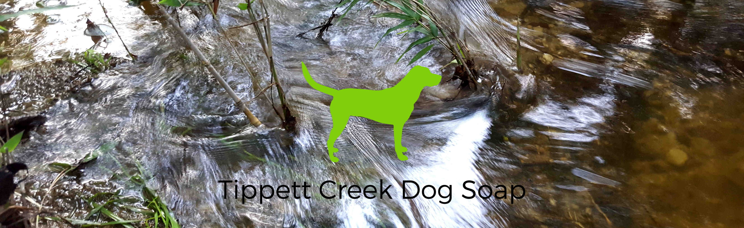 tippett-creek.jpg